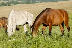 horse_riding_hungary_52